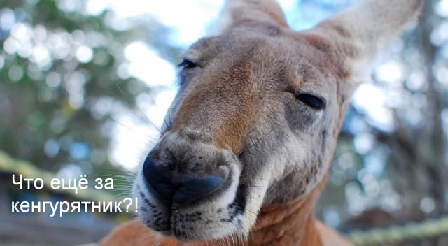 Можно ли ставить кенгурятник  на авто? Что для этого нужно и где оформляться?