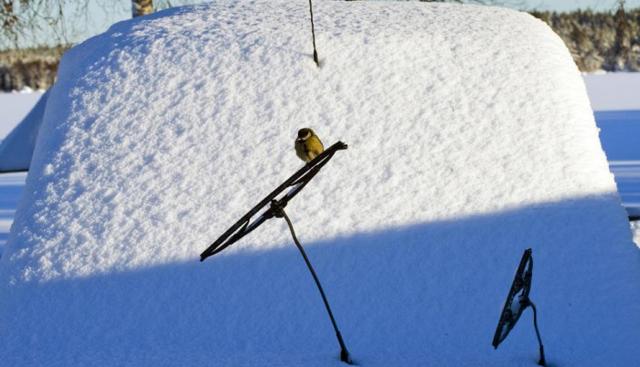 Какие дворники лучше поставить на зиму? Рассматриваем комфортные варианты